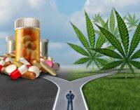Officials see marijuana as an alternative to opioids