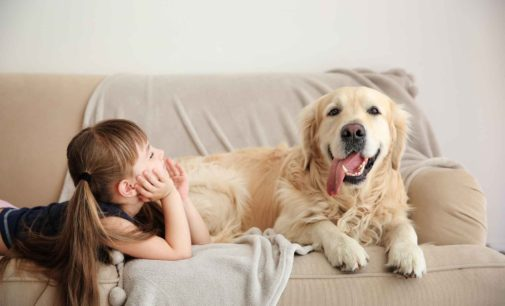 Can having pets in your house be healthy?