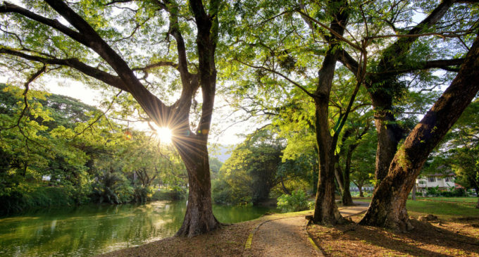 Green spaces are crucial for mental health relief