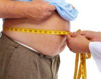Link Between Big Bellies And Shrinking Brains