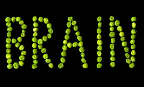 Are Your Habits Turning You Into a Pea-Brain?