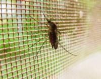 Malaria – a Fungus – and You